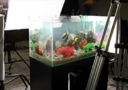 撮影スタジオに設置した水槽