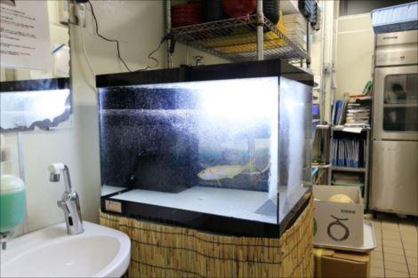 厨房の設置事例