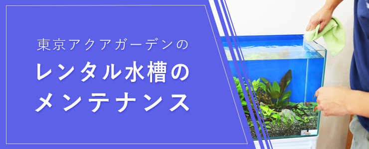 水槽のメンテナンスとは!水槽レンタルサービス 東京アクアガーデンのメンテナンスについて