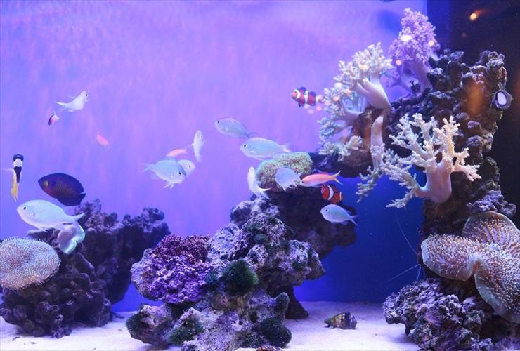 水槽 メンテナンス 水草 サンゴ 確認