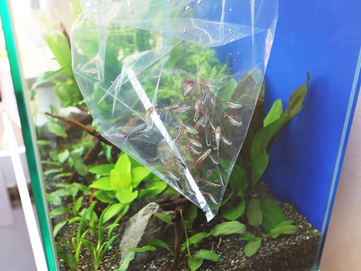 水槽 メンテナンス 生体 熱帯魚