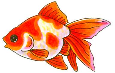 幼稚園 保育園 水槽レンタル 金魚