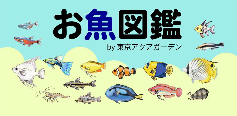 お魚図鑑 東京アクアガーデン
